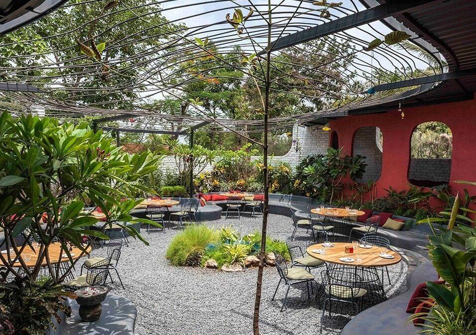 Sân vườn cây cảnh có hình dáng đẹp & bố trí đơn lẻ để tạo điểm nhấn