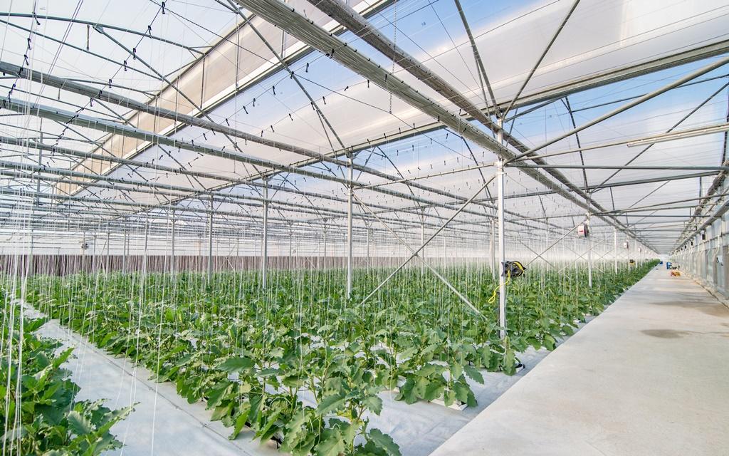 Nhà thép được ứng dụng trong trang trại nông nghiệp